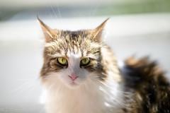 If it's not fun, you're not doin it. right? (miyukiz4 su ood) Tags: cats cat kitten  gttino chaton gatito ktzchen gatinho