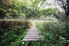 Boardwalk Into the Woods (Nicholas Erwin) Tags: boardwalk woods nature forest hiking trees foliage mist fog vegetation vermont vt usa unitedstatesofamerica nikon d610 1635f4vr