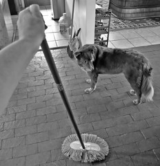 Collecting the Dust Puppies (Weather Cooling Down...Nice!!!) Tags: theflickrlounge yardgardenhousework dusting mop blackandwhite shizandra diningroom hand housework floor brick saturdaytheme wk34