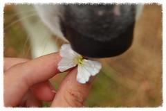 DSC_0330 (Emma Plume) Tags: museau chien truffe fleur papillon main