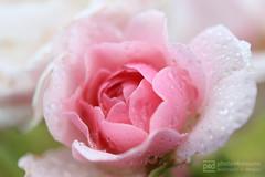 sunday walk 11.09.2016 -p4d- 123 (photos4dreams) Tags: sundaywalk11092016p4d sonntagsspaziergang spaziergang photos4dreams p4d photos4dreamz pflanzen blumen plants flowers