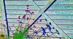 Mocking Shadows (creepingvinesimages) Tags: shadows flowers colors barns barndoor outdoors green blue samsung galaxy 7 pse14 topaz restyle adjust