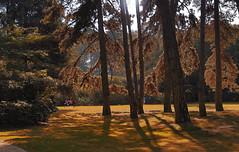 rboles (studiof laboratorio audiovisual) Tags: rbol rboles trees tree paisaje studiof studiofaudiovisual studioflaboratorioaudiovisual street park parque bruselas brussel brussels bruxelles belgica belgique belgium flaviolorenzo
