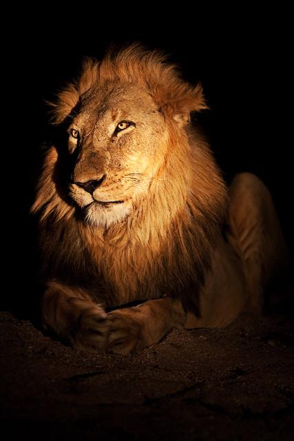 The King of Timbavati