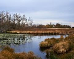 Cold North-East Wetland (SeanEsopenko) Tags: city blue autumn trees winter sky calgary fall water grass zeiss 50mm bush nikon bare 14 crab lagoon brush marsh marshland wetland planar d800 limits zf2