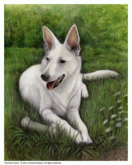 Summer Snow ,  color pencil and prismas   on  Bristol board.. (Artist Victoria Watson) Tags: green art dogs drawings germanshepard colorpencil animalart whitedogs petportraits dogportraits animalportraits whitegermanshepard prismas handrendered impressedbeauty impressedbyyourbeauty dogsinart dogdrawings drawingsofdogs germanshepardportraits alittlebeauty prismadrawings germanshepardart amimalart germanshepardpaintings prismadogdrawings prismapetportraits