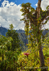 Cloud Forest (fesign) Tags: travel summer mountain plant tourism peru southamerica nature inca stone forest landscape ancient hiking south steps sunny nobody ridge journey valley andes civilization spirituality cloudforest machupicchu past cloudscape precolumbian incatrail lostcity famousplace placesofinterest internationallandmark theamericas worldsgreatwonders