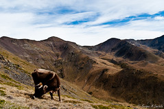 Pure Nature -- Pirineo Cataln (hunter of moments) Tags: viaje blue light sky naturaleza mountain color green art luz nature azul clouds landscape cow nikon paisaje catalonia cielo nubes montaa vaca hierba d5000