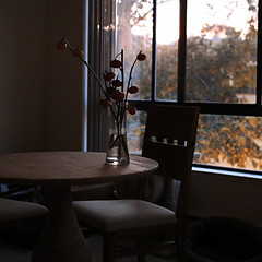 At dusk (Pink Scarf) Tags: home window table evening dusk diningroom domesticlife canon50mm14 pumpkinstems canon5dmkiii