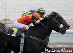 Huayas vs Janaceck 14.10.2012 (Mariano Alvaro) Tags: madrid caballos carreras zarzuela hipodromo yeguas amorebieta janaceck oltusfotos azamor huayas