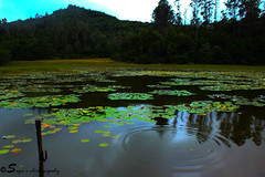 Ripple! (sugavinesh1) Tags: sun mountain lake tree green water photoshop canon landscape photography jump ripple lakes best awsome waters suga kodai kodaikanal greenish 600d sugavinesh lakws