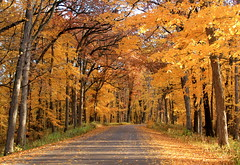 Country Autumn Gold (Cole Chase Photography) Tags: autumn autumnroad iowa palisadespark palisadeskeplerstatepark fall leaves foliage trees october latefall falldrive autumndrive gold golden canon t3i