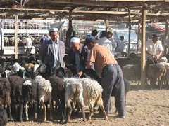 Kashgar animal market in Xinjiang, China (mbphillips) Tags: xinjiang 新疆 中国 west 中國 شىنجاڭ kashgar 喀什 قەشقەر fareast asia アジア 아시아 亚洲 亞洲 china 중국 mbphillips canonixus400 market 市場 市场 시장 mercado geotagged photojournalism photojournalist travel