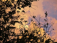 (Leonardo Martins) Tags: sunset brazil cloud nature rio brasil riodejaneiro lumix leaf bresil brasilien cu tropical g2 folha nuvem rvore brsil sudeste