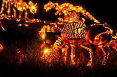 The Great Jack O' Lantern Blaze (joshbousel) Tags: travel food usa holiday ny newyork halloween fruit pumpkin unitedstates jackolantern unitedstatesofamerica eat squash northamerica crotononhudson vancortlandtmanor thegreatjackolanternblaze