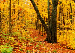 Guardian of the Path (Mark Deisinger) Tags: autumn trees red orange fall beautiful leaves minnesota yellow forest woods october northshore obergmountain pathscaminhos