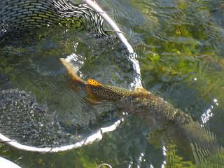 Montana Bighorn River Fishing Lodge 15