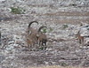 Texas Whitetail Hunt & Exotics - Kerrville 23