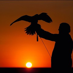 Falconer JR .... #falcon #falconer #arab #arabic #tradition #hawk #hunting #sunset #silhouette #shadow #trace #orange #black #contrast #young # # # # # # # # # (awadi) Tags: sunset shadow orange black silhouette contrast square hawk hunting young trace arabic arab squareformat falcon tradition  falconer         iphoneography instagramapp uploaded:by=instagram
