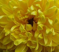 DSC00151 (Jeanie G) Tags: topshots mixedflowers photosandcalendar flowersarebeautiful excellentsflowers natureselegantshots exquisiteflowers mimamorflowers awesomeblossoms flickrflorescloseupmacros panoramafotogrfico thebestofmimamorsgroups theoriginalgoldseal flickrsportal natureandpeoplenatureplus