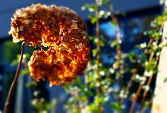 Autumn mood (Aperture111-Thanks for 1000000+ views) Tags: autumn nature natur autumnmood sonyalpha65 me2youphotographylevel1 sonysal50f181 850mmsam