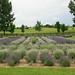 Shenandoah Valley Bach Festival 2012 - Garden Tour