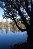 Dark Tree (juliereynoldsphotography) Tags: park trees reflections pond juliereynolds stadtmoers