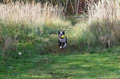 Jump & Run 28.10.2012