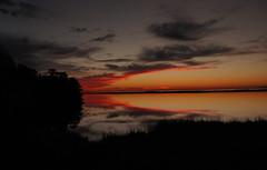 Dauphin Island and D'Olive Bay (Cathy Hennessy) Tags: sunset nature birds alabama daphne oldtruck greategret kestrel egrets dauphinisland willet dolivebay bonapartegulls cathyhennessy