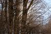 Invierno en Aralar (marathoniano) Tags: art nature spain arte natura bosque árbol invierno espagne hayas navarra lekunberri aralar natruraleza marathoniano uhartearakil ramónsobrinotorrens