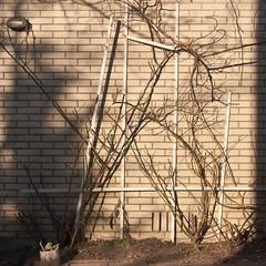 Trell is gone (glukorizon) Tags: light plant flower brick lamp rose wall garden wand roos trellis flowerpot athome tuin thuis muur bloem odc baksteen bloempot pastitsprime odc2 latwerk ourdailychallenge