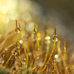 golden mossy morning (s@ssyl@ssy) Tags: