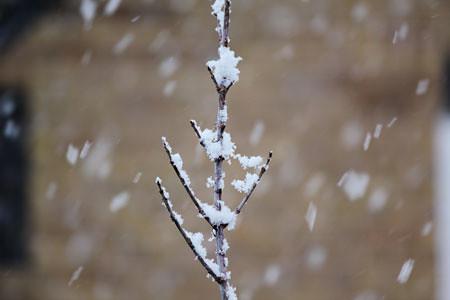 snowtree2