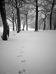 JUST WALKING THE DOG (kenny barker) Tags: bw monochrome scotland boxer 20mm bonnybridge f17 scottishlandscape landscapeuk olympusep1 kennybarker