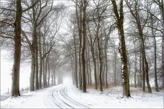 Goodbye to winter ... for the time being (Bert Kaufmann) Tags: morning schnee trees winter mist snow holland tree netherlands misty bomen nebel sneeuw nederland boom arbres neige nl bäume arbre paysbas baum hdr olanda drenthe ochtend niederlande eelde bospad bosweg mysterieus tynaarlo