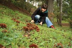 rebolar com os ouriços (LetsLetsLets) Tags: portugal dezembro 2012 marrons sãopedrodosul castanhas ouriços