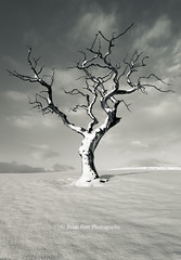January 2013 (.Brian Kerr Photography.) Tags: winter blackandwhite snow cold tree mono cumbria tonybennett 2013 takeaview thepowerofnow lpoty xmascomp15