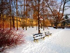 Last Snow (Hazel K.) Tags: snow cold bench landscape scenery melting chill sunwinter lasttress