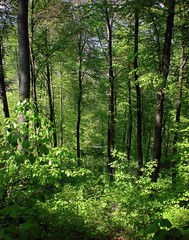 Forest Trees (David K. Marti) Tags: fantastic nature natural growth growing outdoor outdoors color colorful colour colourful colored green greens tree plant nikon coolpix s210 wilderness wood rural forest