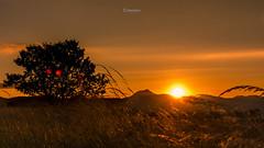La savane Auvergnate (cleostan) Tags: d7100 nikon france auvergne puy de dme savane jaune tamron gergovie chanedespuys sunset coucher soleil herbe t 2016 juillet