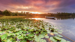 Highland Lilies (ABel-Photo) Tags: landscape scotland highland loch lake trossachs water sunrise summer