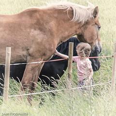 touch (sami kuosmanen) Tags: kosketus child hevonen horse suomi finland niitty kes summer ihminen human pieni small elin animal grass touch emotion tunne nofear pelko rohkeus