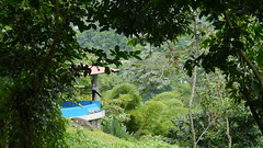 spa (Mayan_princess) Tags: chiapas argovia finca resort caf coffee kaffee paraso paradise vegetacin vegetation verde green ro river spa relajacin relax forest selva orgnico autosostenible