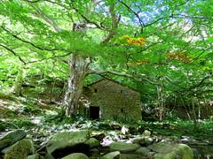 IMG_0018y (gzammarchi) Tags: italia paesaggio natura montagna firenzuolafi vallerovigo riorovigo bosco fiume pietra albero casa
