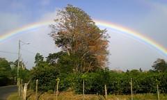 Arco Iris/Rainbow (vantcj1) Tags: arcoiris paisaje cielo nubes naturaleza vegetacin rboles cafetal cercado cableado