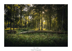 Barrire naturelle (Naska Photographie) Tags: naska photographie photo photographe paysage landscape forest fort nature arbres threes wood bois soleil sun