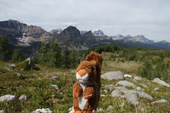 Col Healy (MetallYZA) Tags: 2016 canada alberta banff mascot mascotte peluche stuffedanimal mountains montagnes rockies rocheuses hiking rando randonne healypass colhealy