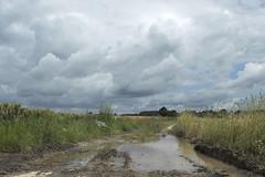 DSC_2723 (Frie Van Grunderbeeck) Tags: belgium belgi vlaamsbrabant hageland outdoor landschap landscape kerkom boutersem wolk cloud veld field plas puddle