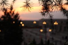Madrid para soadores (Aida G. Capdevila) Tags: madrid espaa spain capital palacio palace real sueo dream lights light sunset anochecer farolas
