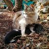 Feeding the kittens (Frank Abbate) Tags: cat cats kitten kittens gatti gattini gatto gatta mother country love nexus5 mamma